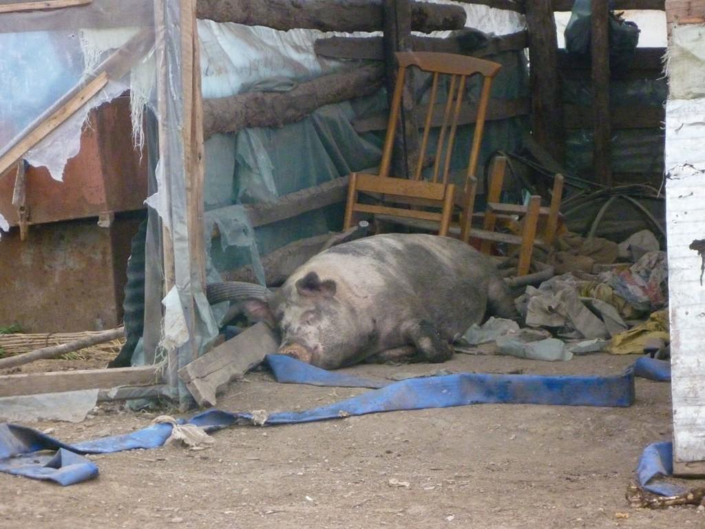 Hog where we had dinner